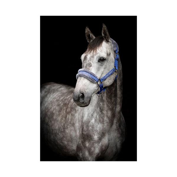 Grime fra Horse Unique